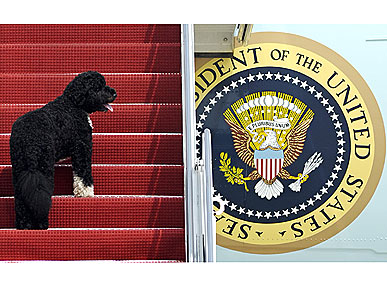 The Water Bowl: Bo Has the Run of Air Force One! Plus, Robbie Williams' Dog-Filled Wedding