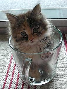 Animal D'Oh! Kitten Thinks Measuring Cups Are for Sleeping