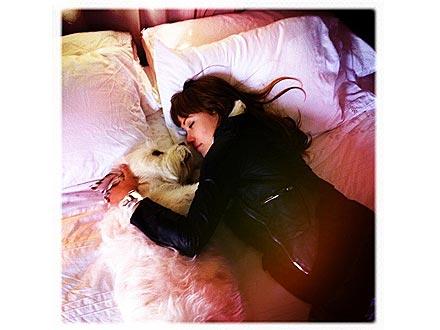 Olivia Wilde's Boyfriend: Her Dog