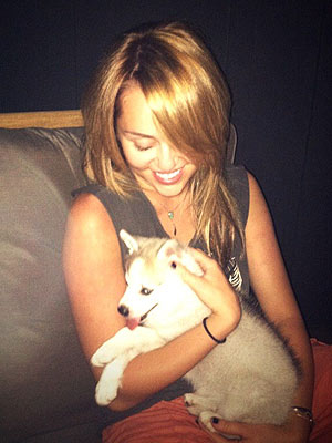 Miley Cyrus Gets a New Puppy!