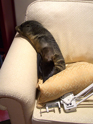Wandering Seal Pup Walks Into New Zealand Home
