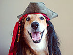 Arrr! 12 Pets Who Talk Like Pirates