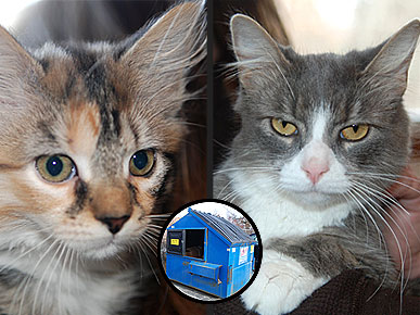 Adopt Us! Cats Maggie and Rose Are Back from the Brink