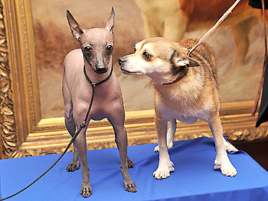 Get to Know the AKC's Newest Breeds