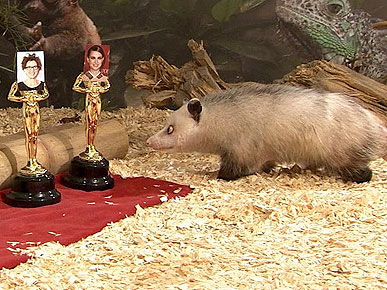 Heidi the Cross-Eyed Possum Predicts Oscar Winners!