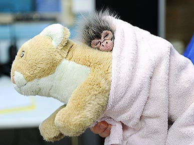 Aww! Abandoned Baby Monkey Finds a Cuddle Buddy
