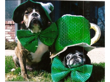 Lick Me, I'm Irish! Your St. Patrick's Day Pets