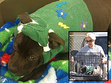 Exclusive katherine heigl rescues a bait dog