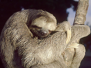The Water Bowl: How Sleepy are Sloths? Plus, Animals Playing Basketball!
