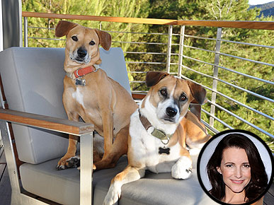 Kristin Davis's Dogs Have Her 'Well-Trained'