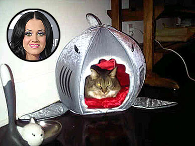 Get the Look: Kitty Purry's Fierce Shark Bed