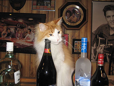 Animal D'Oh! Tabasco the Cat Will Take Your Drink Order