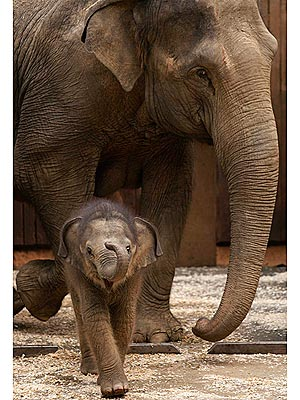Cute Photo: Baby Elephant Turns Up Her Trunk with a Smile