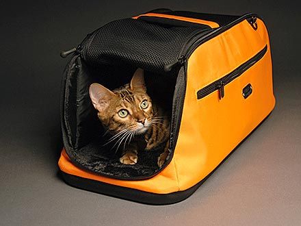 10 Cool Cat Products