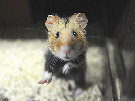 The Water Bowl: Is France Neglecting Its Hamsters?