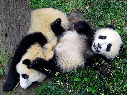 European Debt Crisis Delays Panda Delivery