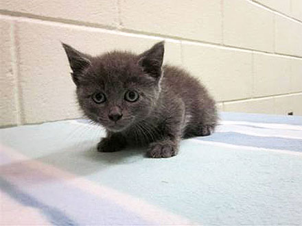Kitten Tossed from Moving Car on N.Y.C. Bridge