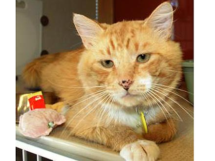 Adopt Me! Alan Jackson Wants to Serenade You With Purrs