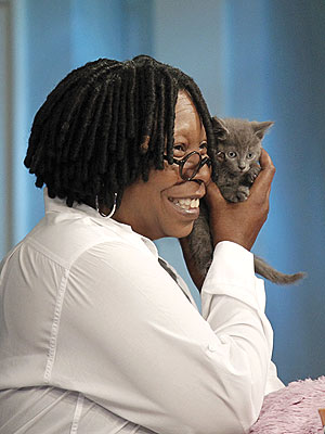 Whoopi Goldberg Adopts Kitten Thrown from Car on Verrazano Bridge