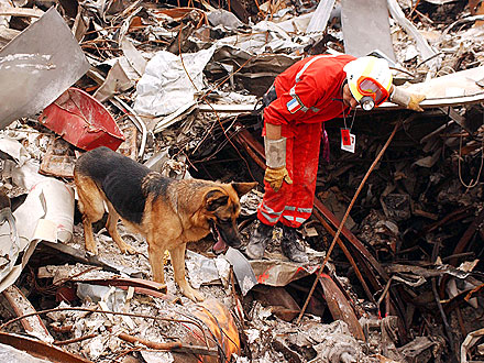 What Happened to the Dog Heroes of 9/11?