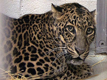 Exotic Animals in Ohio Killed, Contained