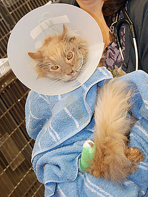 Jack the Cat Found at JFK, in Critical Condition