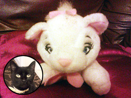 The Water Bowl: Trapped Cat Turns Out to Be Stuffed Toy