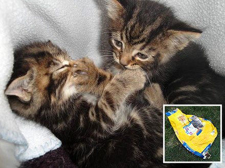 Dog Rescues Kittens Dumped in Meow Mix Bag