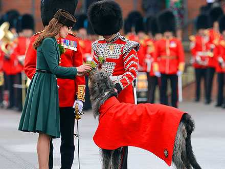 Kate Gives Shamrocks to an Irish Wolfhound