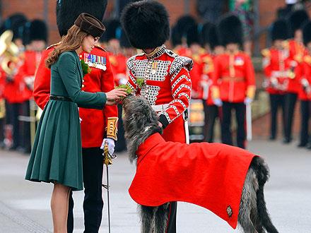 Kate Gives Shamrocks to an Irish Wolfhound