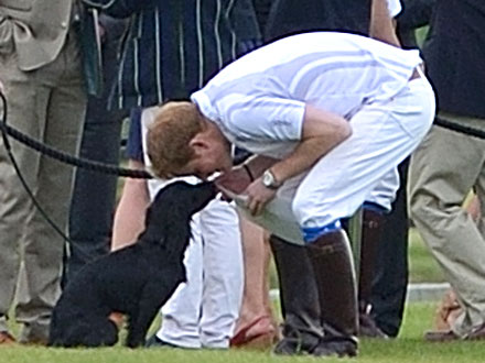Prince Harry Rubs Noses with Lupo