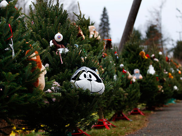 Connecticut School Shooting: Christmas Tree Tribute