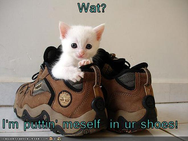 6 Reasons Pets Need Shoes