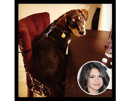 Selena Gomez's Dog Sits at the Table