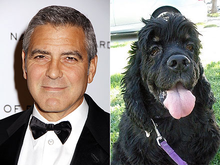 George Clooney: How He Rescued Dog Einstein