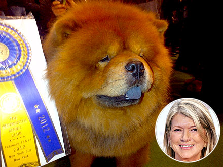 Westminster Dog Show: Martha Stewart's Dog Wins Best of Breed