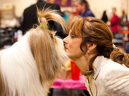Westminster Dog Show: 10 Wacky Photos