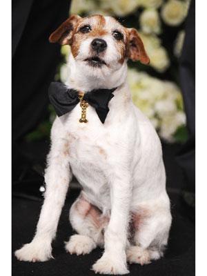 Uggie Oscars Chopard Collar Details