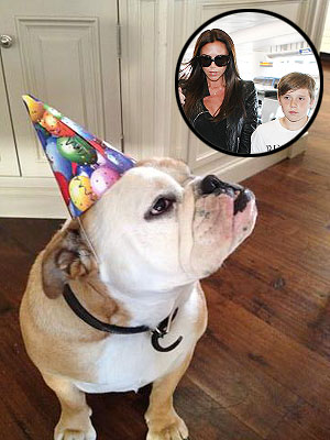 Victoria Beckham Dog Celebrates Brooklyn Beckham Birthday