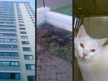 Deaf Cat Falls 19 Stories from High-rise and Survives