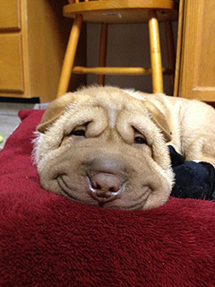 Smiling Dog Grins His Way to Viral Glory