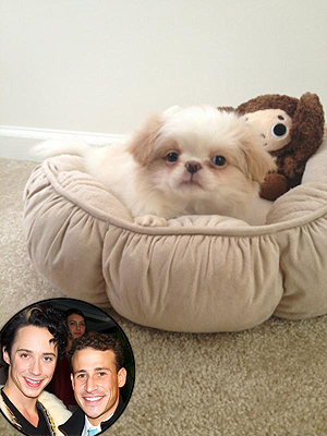 Johnny Weir Gets New Dog