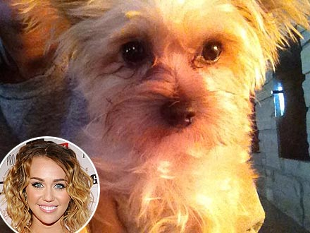 Miley Cyrus Not Engaged, Tweets Photo of Dog
