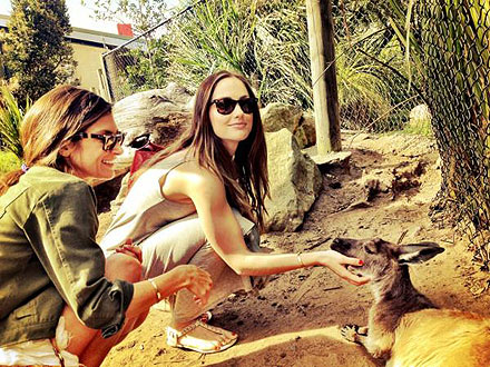 Minka Kelly Meets Kangaroo at Taronga Zoo: Photo
