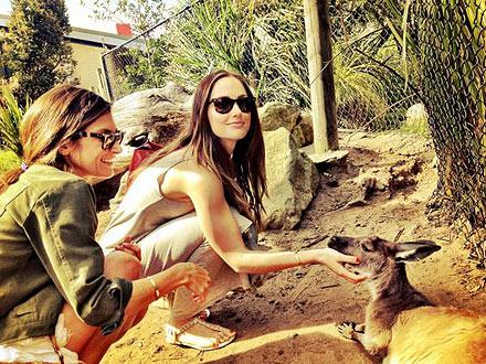 Minka Kelly Meets Kangaroo at Taronga Zoo: Photo