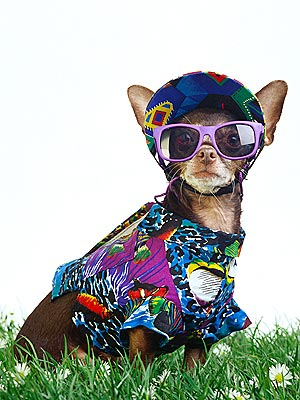 Cinco de Mayo Parade to Feature 700 Costumed Dogs