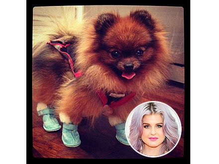 Kelly Osbourne Tweets Photo of Dog Story in Booties