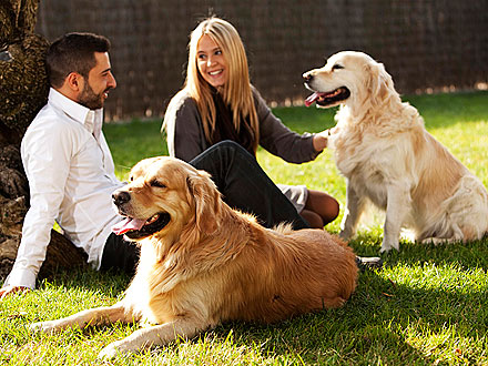 Social Networking Site Brings Together Dog Owners