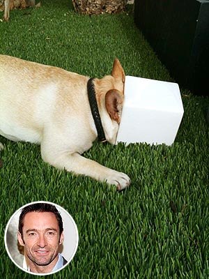 Hugh Jackman's Dog Is a 'Pot Head'