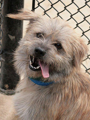 Adopt Me! Joba Wants to Be Your Friend for Life